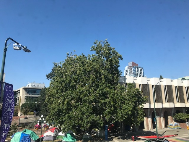 A homeless encampment is seen outside of Victoria City Hall: July 30, 2020 (CTV News)