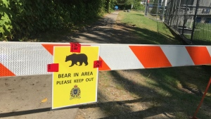 A sign asking people to stay back because of an aggressive bear is seen in Port Moody on July 30, 2020.