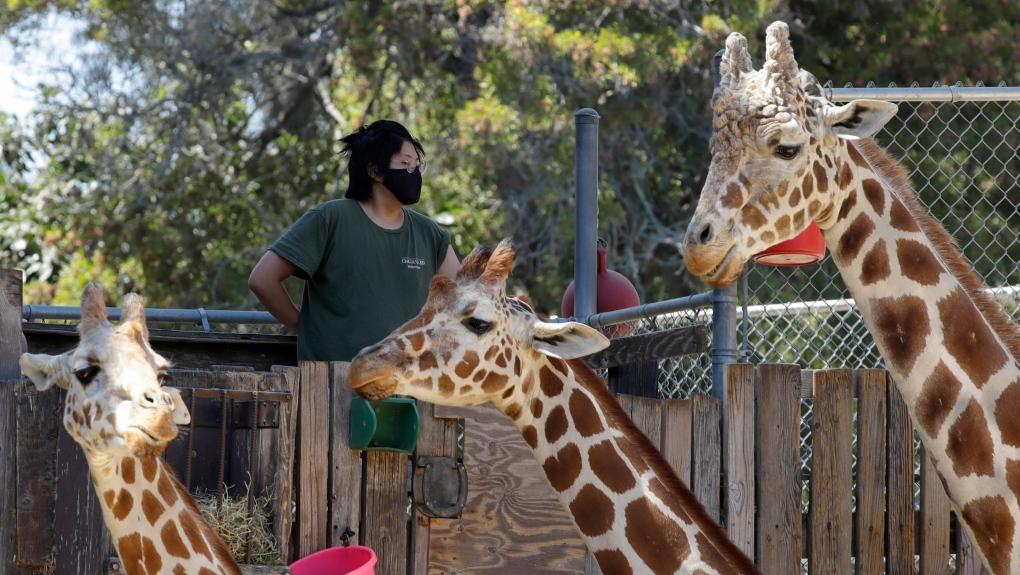 Zoos coronavirus
