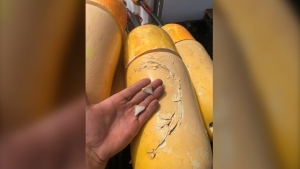 On Friday, several photos taken by MacDonald were posted to his family business' Facebook page showing a buoy in the same area with bite marks, and large shark teeth left behind.