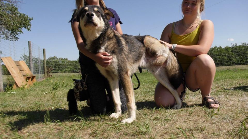 Saskatoon dog rescue