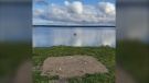Stephen Pasher calls it his Fifty-Fifty Floating Hole; a golf green platform floating in the middle of Lingan Bay, N.S.