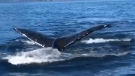 Surprise whale encounter caught on camera