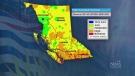 Dozens of wildfires burn in B.C.