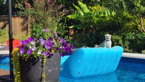 Enjoying a summer day with the family dog by the pool in B.C. Photo submitted by Chris S in August, 2020.