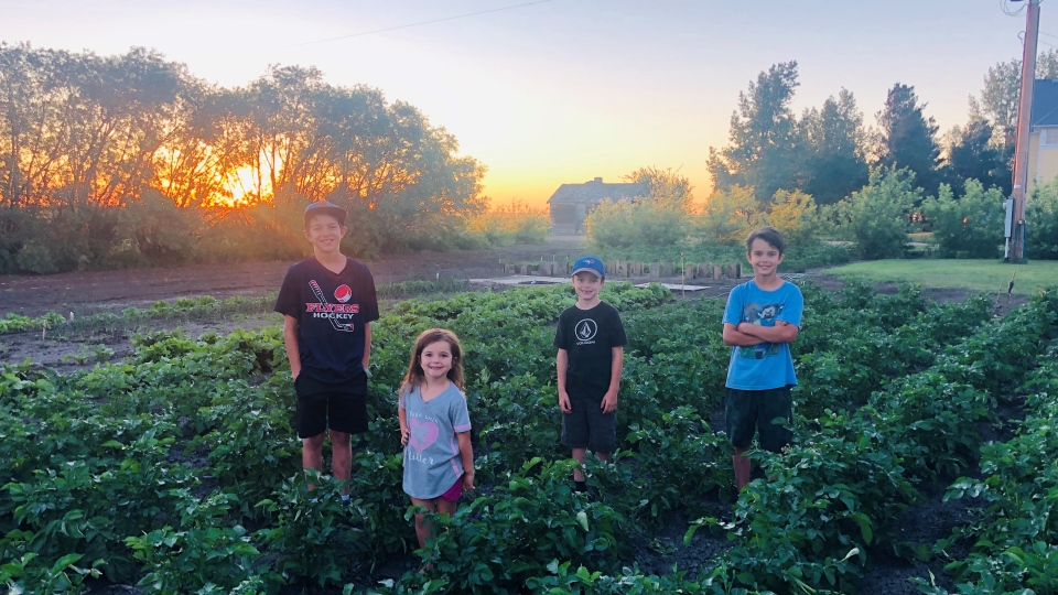 The Stephenson family grows different types of produce in their garden near Milestone, Sask. (Submitted)
