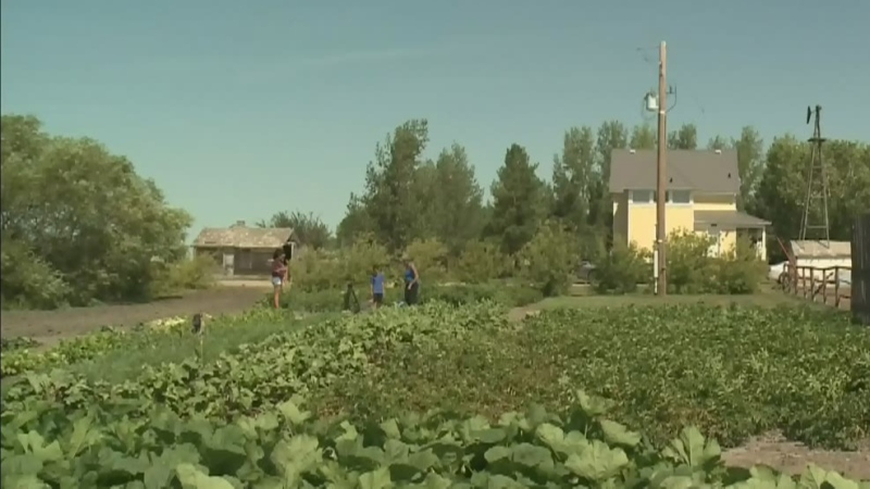 Young Sask. brothers find success with Zeke's Beet