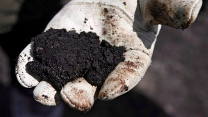 Alberta has signed an agreement with the federal government that makes major cuts to environmental monitoring of the oilsands. An oil worker holds raw sand bitumen near Fort McMurray, Alta., July 9, 2008. THE CANADIAN PRESS/Jeff McIntosh