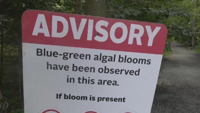 Algae advisory