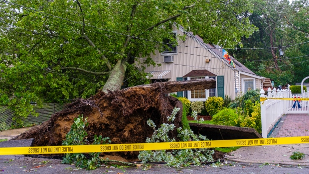 A tree toppled onto a home on Concord Avenue in West Hempstead, N.Y., following heavy winds from Tropical Storm Isaias, Tuesday Aug. 4, 2020. (Jeff Bachner/Newsday via AP)