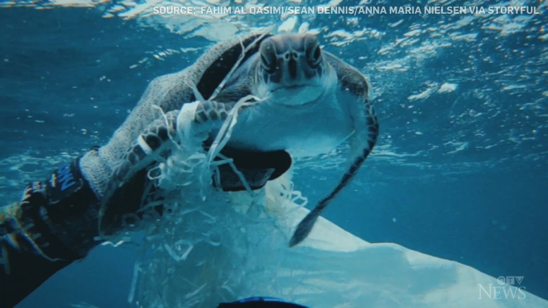 Three divers in the UAE spotted and helped free a sea turtle that was caught and tangled in a plastic bag in the water.