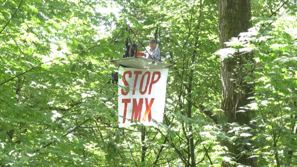 Tim Takaro occupies several trees in New Westminster in protest of the Trans Mountain pipeline expansion Aug. 4, 2020.