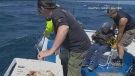 Quite a catch: 82-year-old reels in shark