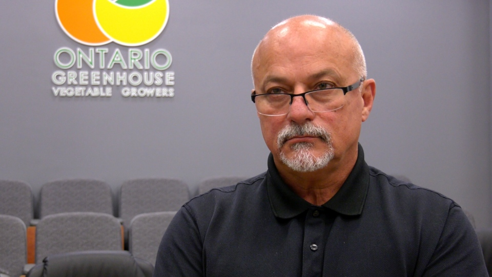 Joe Sbrocchi, the general manager of the Ontario Greenhouse Vegetable Growers association is interviewed at its headquarters in Leamington, Ont., August 5, 2020. (Rich Garton/CTV Windsor)