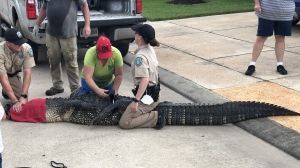 Andrew Grande didn't hesitate before jumping into action when he saw a massive alligator making its way to his 4-year-old daughter. (Andrew Grande/CNN)