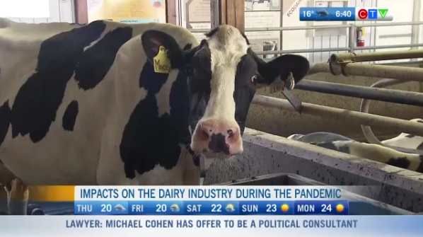 Pandemic impact on dairy industry