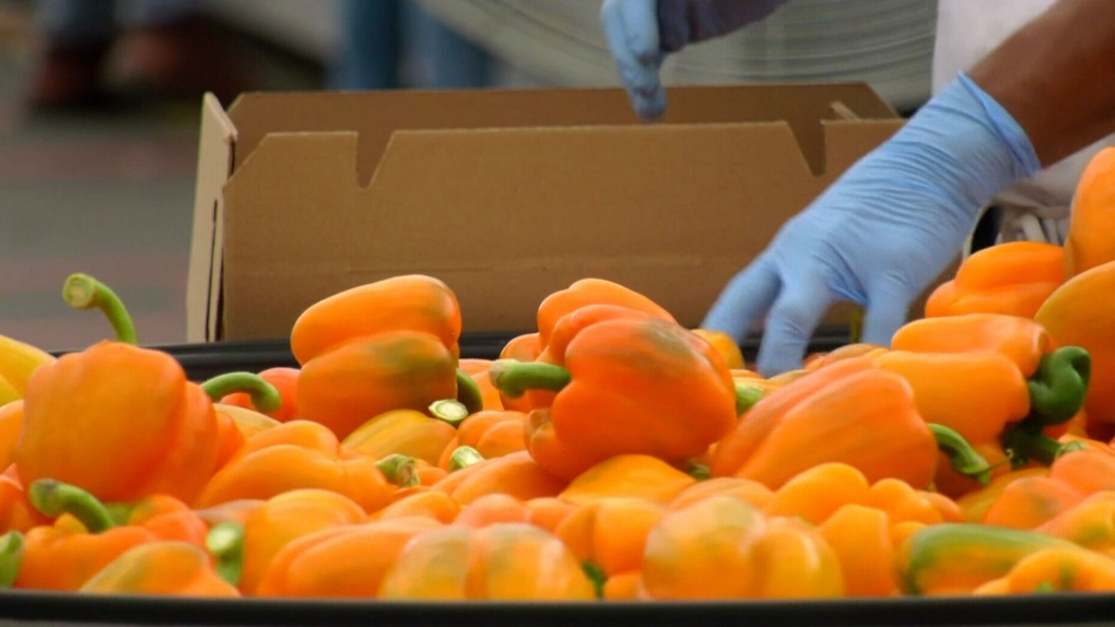 migrant workers, orange peppers
