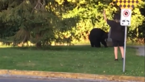 Black bear in Port Coquitlam