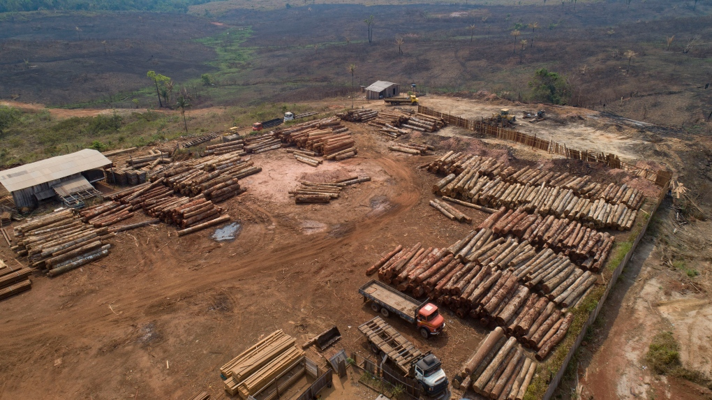 1,600 km2 of Brazilian Amazon deforested in July