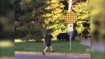 Close encounter with bear shows what not to do