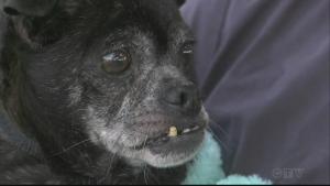 abandoned dog needs care