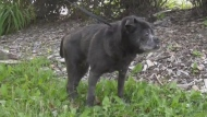 Good news for old dog abandoned in plastic bag