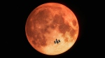 This artist's rendition shows the Hubble Space Telescope observing a lunar eclipse in January 2019. (ESA/Hubble, M. Kornmesser)