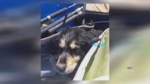 Surfers rescue trapped dog on Vancouver Island