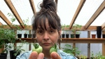 Jess Housty lives in the remote Heiltsuk Nation town of Bella Bella and says she's had troubles with her tomatoes this season. (Jess Housty photo)