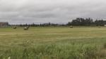 Timmins farmland (Sergio Arangio/CTV Northern Ontario)