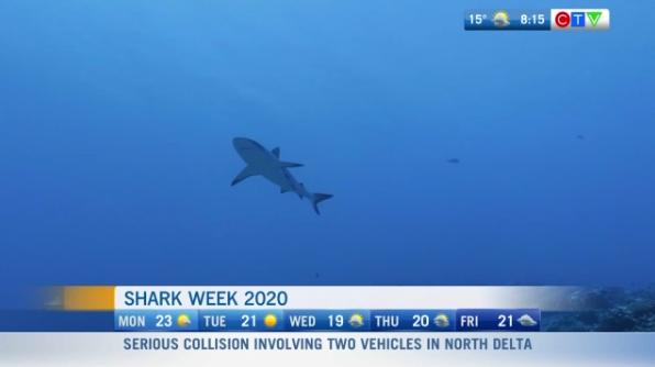 Shark Week, Chasing monsters