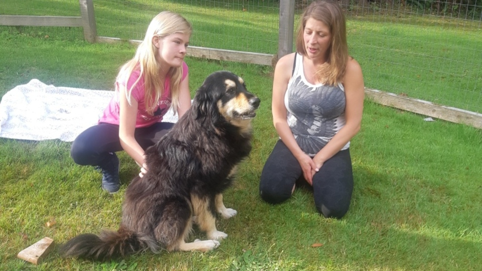 A lost dog that was discovered in the Vancouver Island wilderness has been reunited with its owners after more than three months.