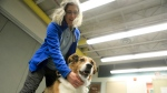 Laura Atwood, public relations coordinator for Anchorage Animal Care and Control, demonstrates how to touch a dog to whom a person has just been introduced by petting Riley, a mixed-breed dog, below its chin. (AP Photo/Dan Joling)