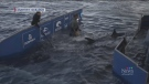 First at Five: Shark sightings in the Maritimes