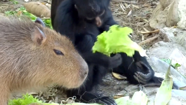 Watch: 'Polish Dr. Doolittle' captures unlikely animal friendships