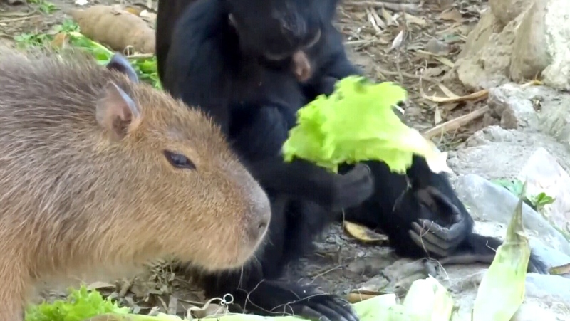 A Polish volunteer has captured some adorable footage showing the unlikely friendships between rescued animals at rehabilitation centres around the world. (Goska Zdziechowska via Storyful)