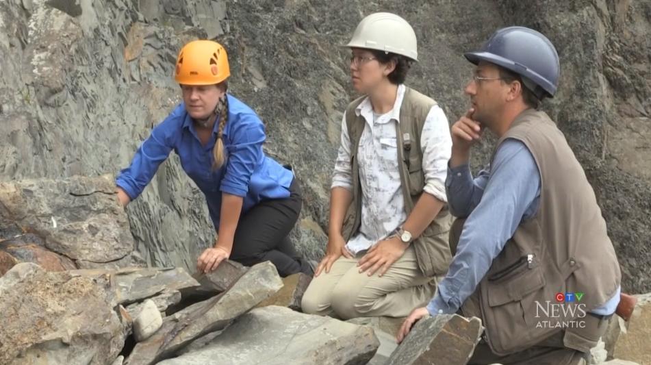 Cape Enrage Fossils