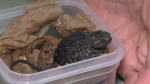 First of many turtles hatch at charitable reserve