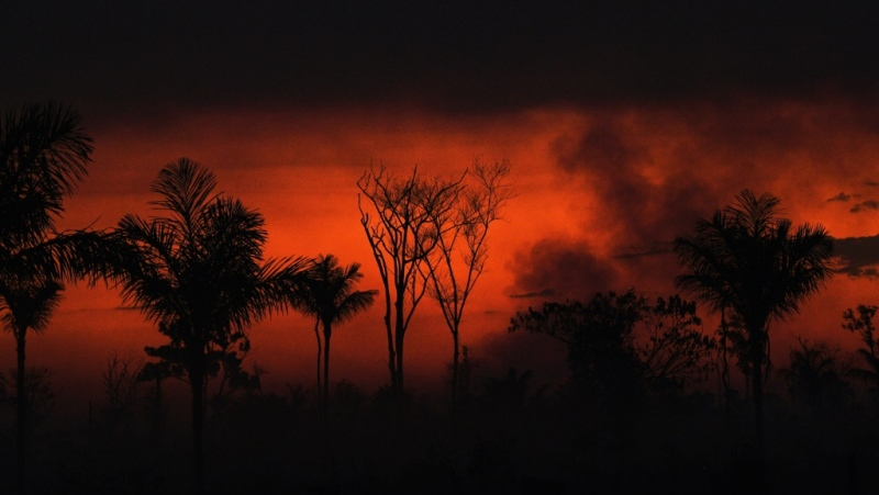 Smoke rises from an illegal fire in the Amazon rainforest reserve, north of Sinop in Mato Grosso state, on Aug. 11. (AFP)