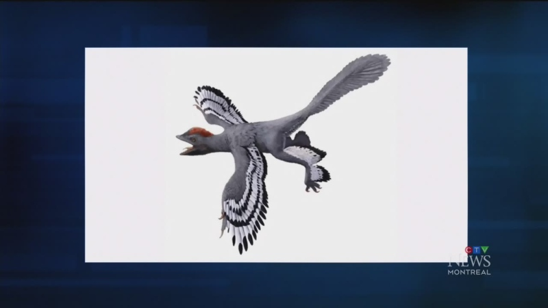 A team of researchers has updated the evolutionary map and it shows some dinosaurs could fly. Hans Larsson of McGill University explains.