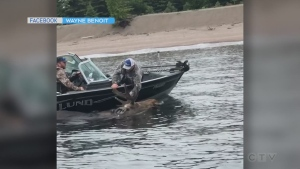 Moose rescue in Lake Superior