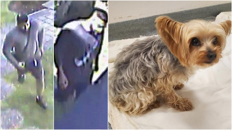 Two suspects in the theft of Lucy (right) are shown in still images from surveillance camera video.