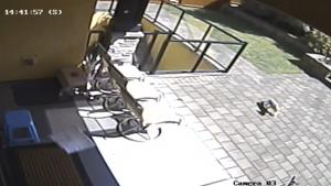Dog stolen in Burnaby