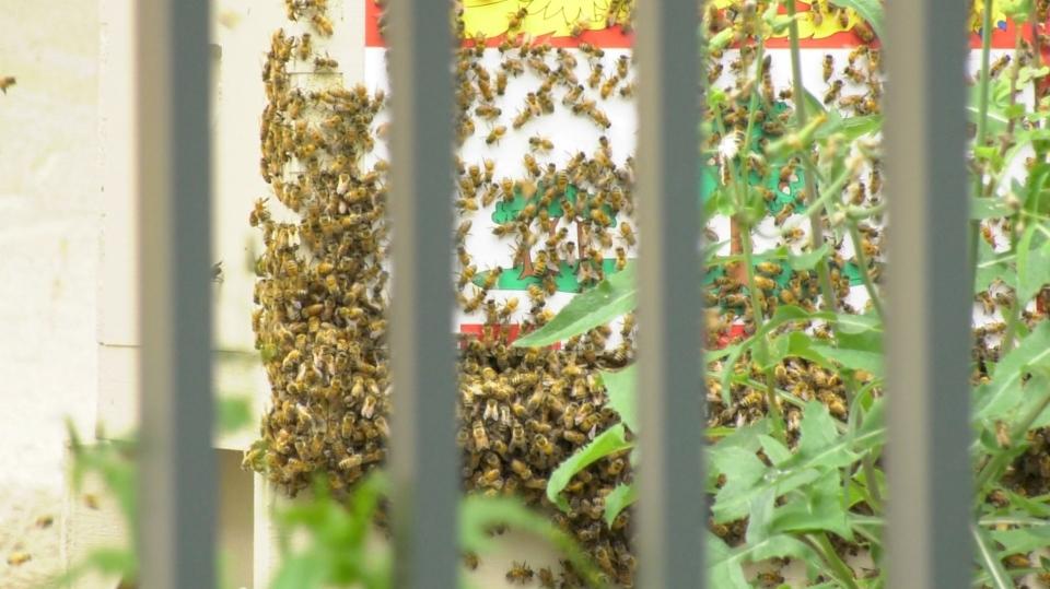 Bees at Senate of Canada building