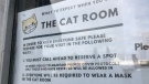 Excalipurr Cat Cafe requires customers to wear face masks. (CTV Regina)