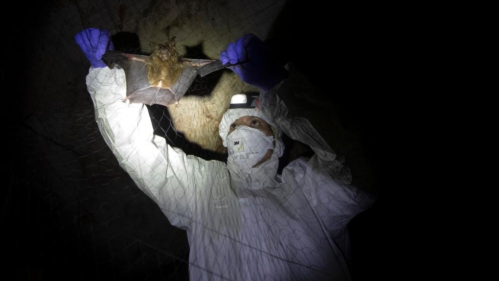 Thailand bats