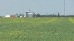 Harvest begins for Sask. farmers