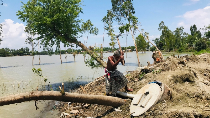 A Bangladeshi elderly person cuts an uprooted tree as the area around him is seen submerged with flooded waters in Manikganj, some 100 kilometers (62 miles) from Dhaka, Bangladesh, Thursday, Aug. 13, 2020. (AP Photo/Al-emrun Garjon)