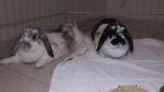 Bunnies found abandoned in Brantford