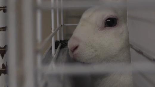 bunny bunnies rabbit brant county spca